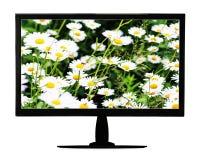 Monitor LCD negro con el prado floreciente aislado en el backgr blanco imagenes de archivo