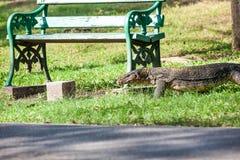 The Monitor lizard Stock Photo