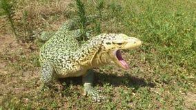 Monitor Lizard Yawning Stock Photography