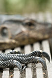 Monitor reptile Stock Image