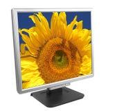 monitor słonecznik Obraz Stock