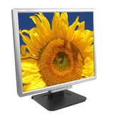 Monitor with sunflower stock image