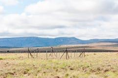 Monitorando o lote no parque nacional de zebra de montanha fotografia de stock