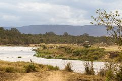 Monitoring the ungulate crossing through the Mara River. Ecotourism in Kenya. royalty free stock images