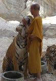 Monje budista con el tigre de Bengala, Tailandia, Asia, gato Foto de archivo libre de regalías