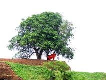 Monje budista en la roca de Sygiriya Foto de archivo libre de regalías