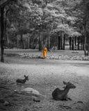 Monje que hace rutina diaria de la limpieza en Tiger Temple en Kanchanaburi, Tailandia Foto de archivo