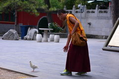 Monk with dove Royalty Free Stock Photography