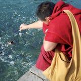 Monk feeding fish. A Buddhist monk feeding fish at the temple at Bodhgaya, India Royalty Free Stock Images