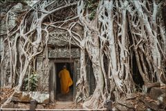 Monk, giant tree and roots in temple Ta Prom Angkor wat Royalty Free Stock Photos