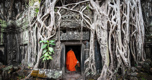 Monk In Angkor Wat Cambodia. Ta Prohm Khmer Temple Royalty Free Stock Image