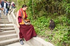 Monk and monkey Stock Photo