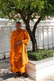 Monk in Orange Robes Beside Tree in Garden. Royalty Free Stock Photo