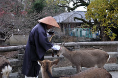 Monk patting a deer. A Japanese monk dressed in monks robes and a traditional straw hat takes a break and pats the head of a deer that has come up to him. Can be royalty free stock photo