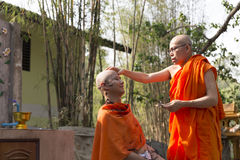 Monk shave man's hair before buddhist monk ordination ceremony Royalty Free Stock Images