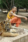 Monk and the Tiger. Buddhist monk and the Tiger in a Tiger Temple, Kanchanaburi province, Thailand stock photo