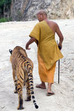 Monk and the Tiger. Buddhist monk and his unique pet at Tiger Temple (Pha Luang Ta Bua Temple), Kanchanaburi province, Thailand Royalty Free Stock Photos