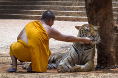 Monk and tiger Stock Photos