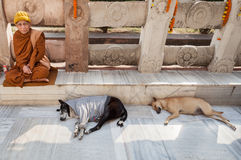 The monk and two sleeping dogs at Mahabodhi Temple. January 29, 2014. India. Bodh Gaya. Inhabitants of northern Indian states, believing in reincarnation, and royalty free stock photo