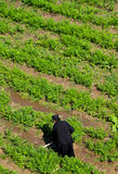 God`s agriculture,monk at work Royalty Free Stock Photos
