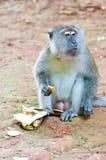 το μπισκότο τρώει monket Στοκ Φωτογραφία