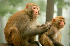 Monkeyâmother et chéri Photos stock