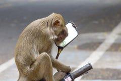 "Monkeyï ½""blick i en spegel arkivfoto"