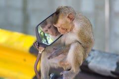 "Monkeyï ½""blick i en spegel royaltyfria bilder"