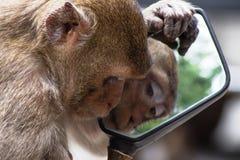 "Monkeyï ½""blick i en spegel arkivfoton"