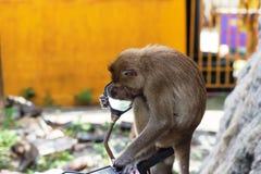 """Monkeyï ½""""blick i en spegel fotografering för bildbyråer"""