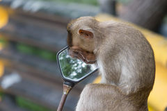 "Monkeyï ½""blick i en spegel royaltyfria foton"