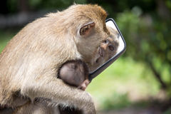 "Monkeyï ½""blick i en spegel arkivbild"