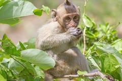 """Monkeyï ½ """"som äter royaltyfri foto"""
