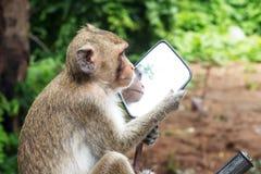 Monkeyï ½ 'spojrzenie w lustrze Obrazy Royalty Free