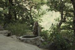 Monkey при младенец сидя на следе в лесе стоковое изображение rf