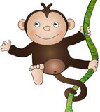 Monkey Stock Image