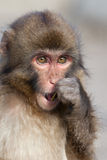 Monkey. It is a monkey sitting on the ground Royalty Free Stock Photos