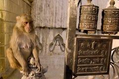 Monkey. And prayer mills in Swayambhunath temple,  Kathmandu, Nepal Stock Photos