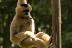Monkey! royalty free stock photography