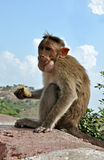 Monkey. Sitting on rock holding the banana in hand Royalty Free Stock Photography