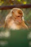 Monkey. 's life in the zoo Stock Photo