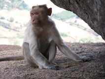 Monkey. In profile Stock Photo