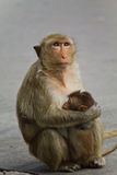 Monkey. In Lopburi of Thailand Stock Photography
