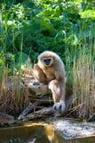 Monkey. On lake beach Africa Stock Photo