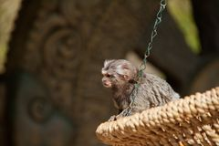 Monkey Stock Images