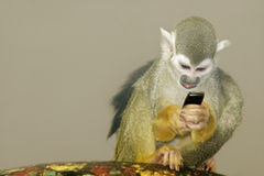 Monkey-2. Monkey with a phone Royalty Free Stock Photos