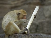 monkey-21 Stockbilder
