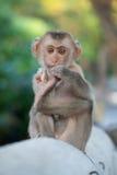 Monkey. Little monkey sitting on a log Royalty Free Stock Image