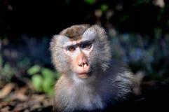 Monkey. In Khao Yai National Park, Prachinburi, Thailand Royalty Free Stock Photos