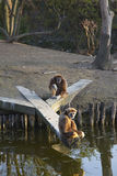 Monkey. S on the bed of a river that keep the visitors of the Royalty Free Stock Image